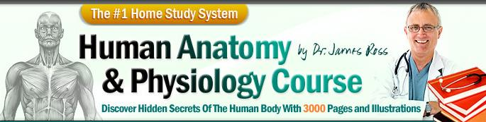 human physiology and anatomy study Who Says We Cant Learn Anatomy and Physiology Of The Human Body  At Home?